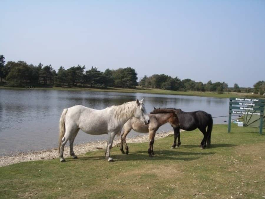 New Forest UK