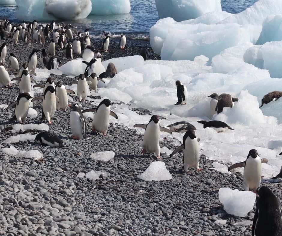Penguins beach Antarctica