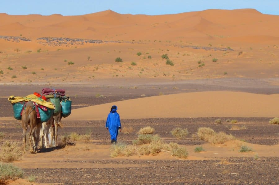 Wild camping with camels